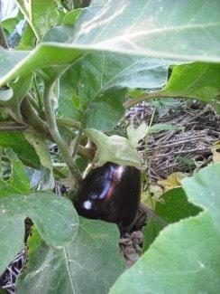 jammie-aubergine