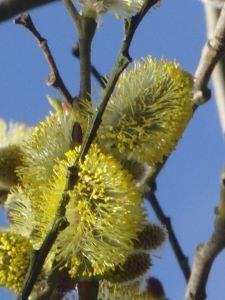 Zo help je de wilde bijen deze winter