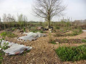 zaden zaaien in de volle grond permacultuurmoestuin