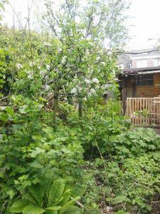 permacultuurgilden-fruitboom