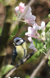 nuttige dieren en planten in de tuin pimplemees