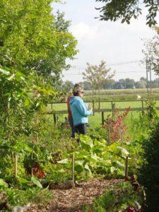 permacultuur tuinonwerp
