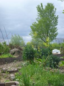 eetbare vaste planten in de voorjaar