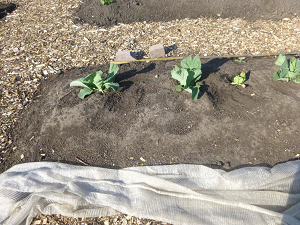 Een stappenplan voor omgaan met droogte in de tuin