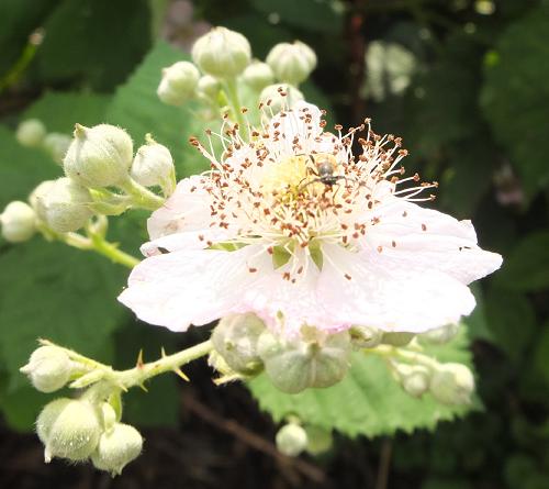eetbare vaste planten bloesemboog